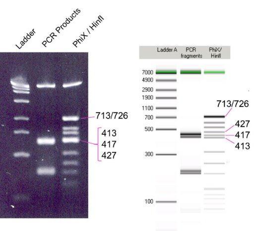 DNA解析 - PerkinElmer Japan